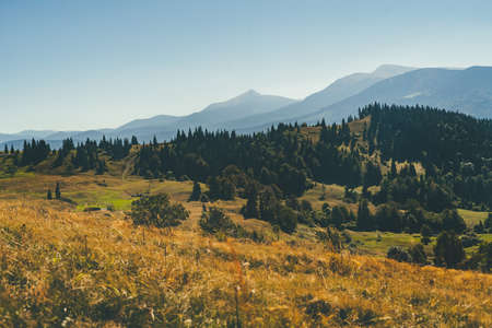 Mountain landscape. Yellow grass in the foreground, pine forest, and mountain peaks in the background. Standard-Bild