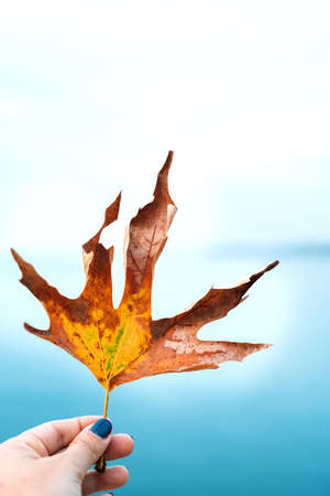 Close-up of a brown dry yellow maple leaf in the girls hand against the blue sea.