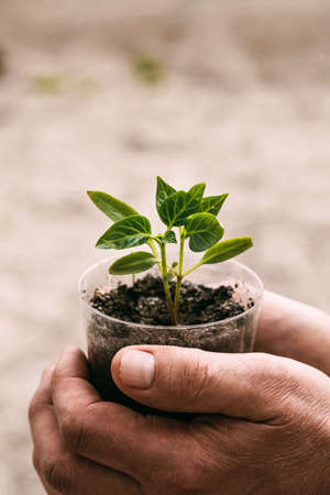 Vertical photo close-up of a mans hand holding a seedling. Copyspace. Gardening. Caring for the planet