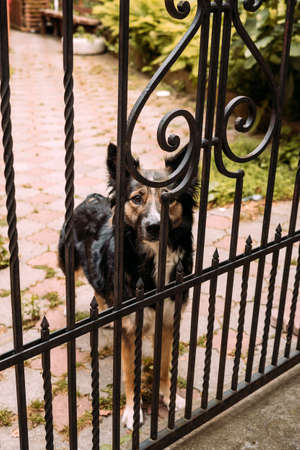 A sad, hungry, tired dog stands behind bars and stares intently into the eyes at the camera. Take the dog from the shelter concept