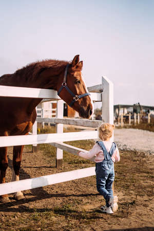 The little girl approached a large brown horse in a levada in the stable. Acquaintance of the child with the animal. Make contact Standard-Bild