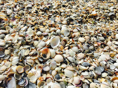 Close-up of seashells lie on the beach on the sand. Marine background and details. Standard-Bild