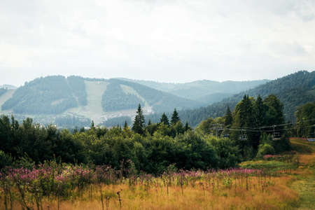 Beautiful mountain landscape. On the hills there is green grass and flowering plants. Carpathians in summer on a sunny day