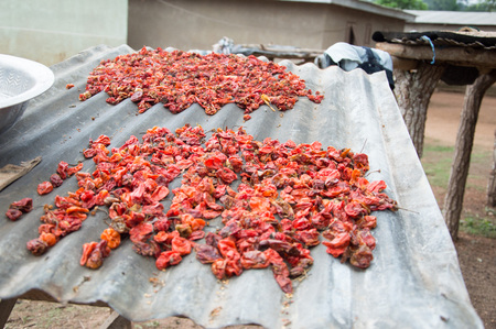 Spread chili pepper in the sun on a sheet height.