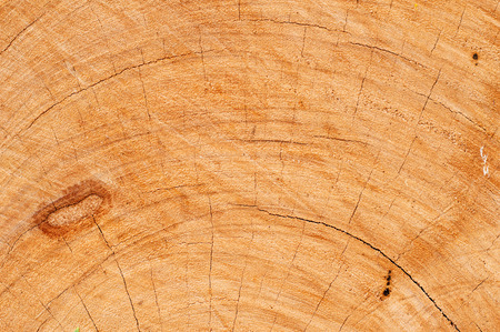 coy: Carpenters cut wood with coy before use.