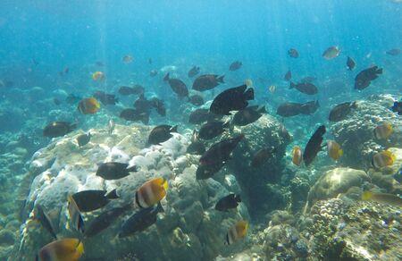 Tropical fish and Hard corals in the underwater of the sea Foto de archivo