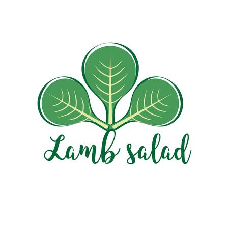 salad plant, corn salad, mache salad. Horticulture