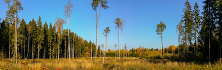 Gorgeous autumn landscape panorama