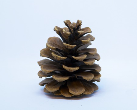 brown pine cone Imagens