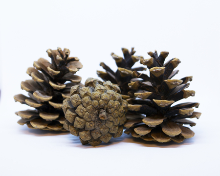 Brown pine cone isolated on a white background