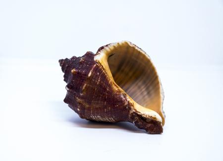 Beautiful Sea shell