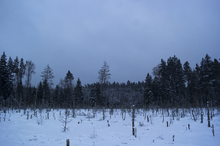 Winter landscape in the forest. Snowing in the woods is about to end Imagens