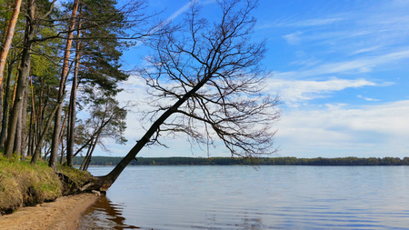 Beautiful landscape with lake in Lithuania. Lake shore and trees