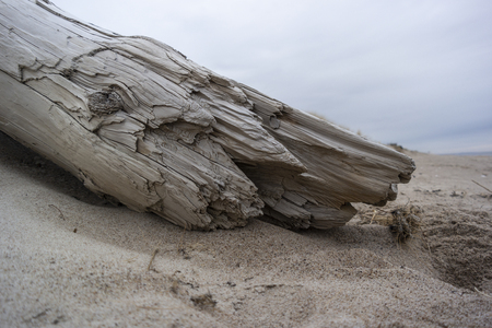 drift wood and seaweed on nordic beach in the morning. Baltic sea Imagens