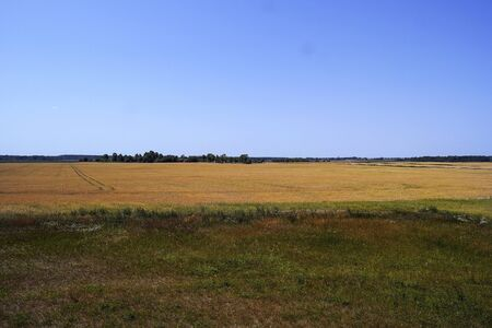 Beautiful panoramic view of a golden wheat field.