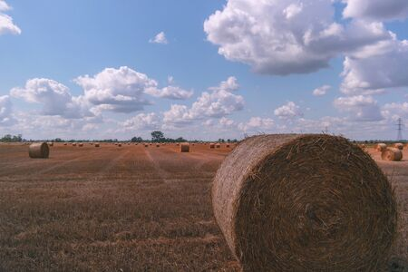 Hay and straw bales in the end of summer. Reklamní fotografie