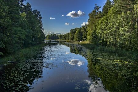 Green trees by the lake on a sunny day, with clouds on the sky Reklamní fotografie