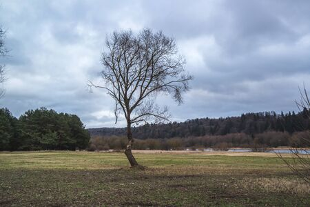 Alone standing tree on yellow sun burnt grass. No leaves, autumn tree, grass and blue sky with clouds. Reklamní fotografie