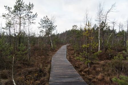 Nature trail, the wooden path over the swamp, sunset in the autumn. European trip. Zdjęcie Seryjne