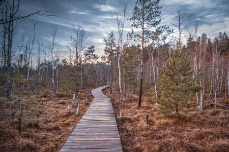 Nature trail, the wooden path over the swamp, sunset in the autumn. European trip. Reklamní fotografie