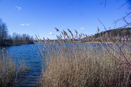 Mixed forest by the lake in early spring. The beginning of spring in the northern countries. March.