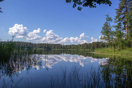 A bright, sunny day at the lake in the countryside. The dark water is calm. Shore-growing trees and shrubs have light green leaves. Beginning of summer, rest at the lake