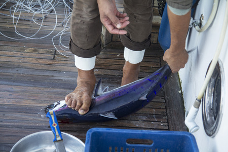 fished: fisherman holding a large tuna fished in the Red Sea