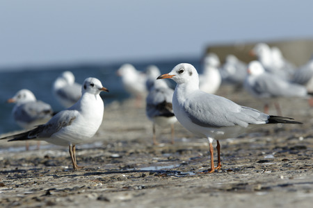 bask: a branch of seagulls stand on a pier in the sea and bask in a sun Stock Photo