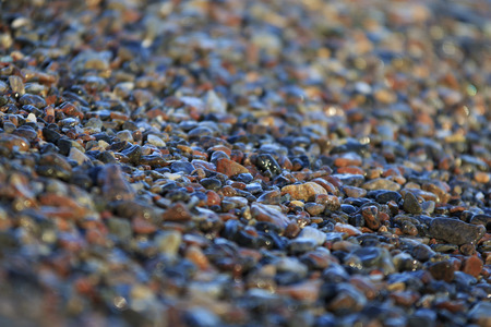 cu: pebble beach with a countless diversity of smooth and wet little stones of different color and shape