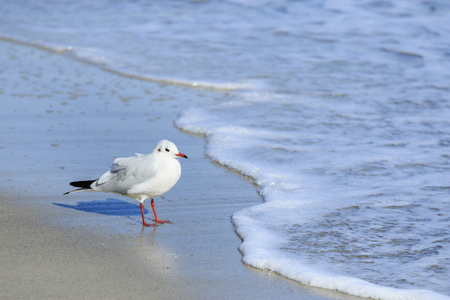 young gull chick stays on a sand at the sea line and looks at water