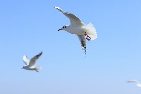 several: several seagulls fly in the blue sky Stock Photo