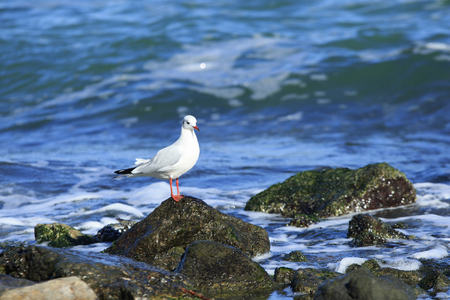 white gull sits on the stone in the sea