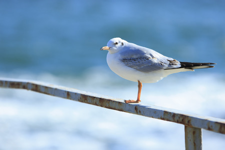 gull sits on a rusty rail in sunlight against the sea background