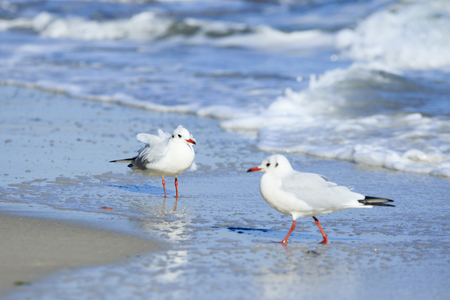 two seagulls at the beach with beautiful light and reflection in the water Stock Photo