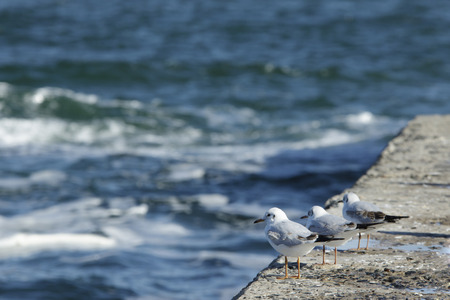 trio: Trio of gulls stand in a row at the edge of the pie and look at the stormy sea