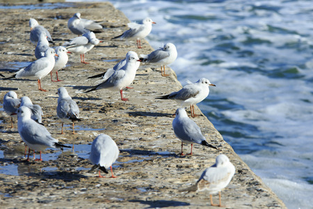 a lot of seagulls stand on the pier and bask in the sun