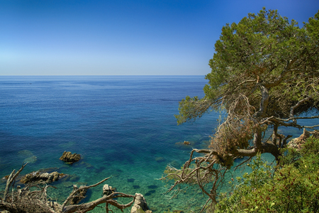 Spanish calm sea shore view from a green slope with old pines