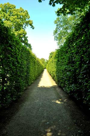 maze in garden