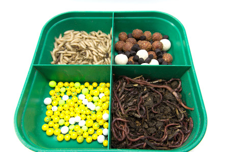earthworms: Baits for fishing. Group of earthworms