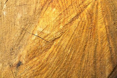 alder tree: Background of wood. Wood Alder. Tree alder