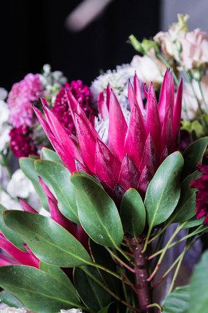 Protea. Blooming flower. Red flower. Flower as crown.