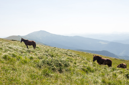 Horses are walking on a mountain massif. Sunny day.