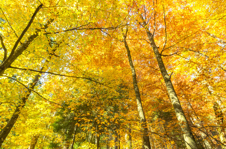 Yellow-orange background in the forest. Warm colors of nature. Warm colors of autumn.