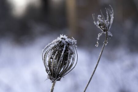 Ice on a plant. Plant in ice. Plant in the winter. Frost and cold. Reklamní fotografie