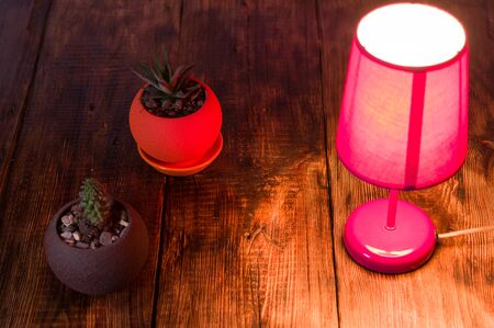 Table lamp and flowerpots. Two cacti in a flowerpot. Top.