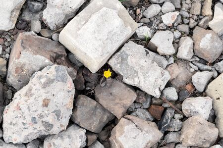 A growing flower through the stones. A flower surrounded by stones. Top. Reklamní fotografie