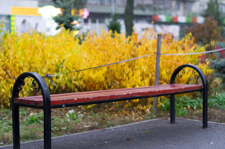 A bench for rest in the park near a beautiful yellow bush. Rest in the park. Banque d'images