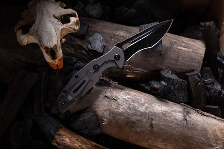 Tactical knife and animal skull. Beaver skull and knife. Top.