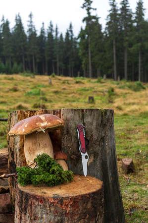 A huge edible mushroom and knife.