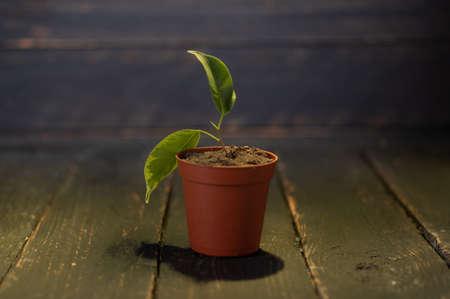 Brown plastic flowerpot. Plant in a flowerpot. Low key.